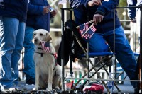 NYC_Veterans_Day_Parade-13