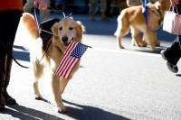 NYC_Veterans_Day_Parade-20