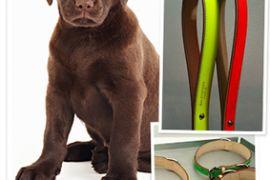Balenciaga plans accessories for dogs