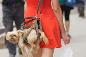 PurseBlog Asks: Do You Carry Your Dog in Your Bag?