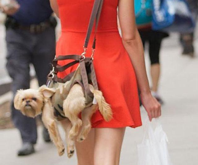 Dog Purse