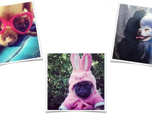 Pup Instagram Roundup