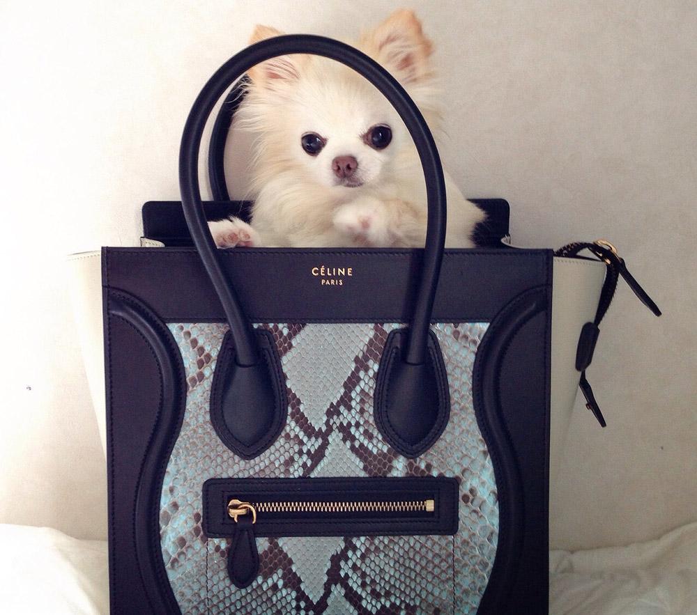 celine designer bag 35xc  celine designer bags celine designer bags