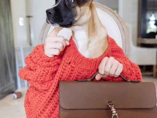 Brutus Gucci Bag