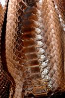 Jane August FDR Tote, brown python detail