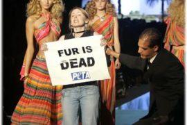 PETA vs. The Models of Cavalli