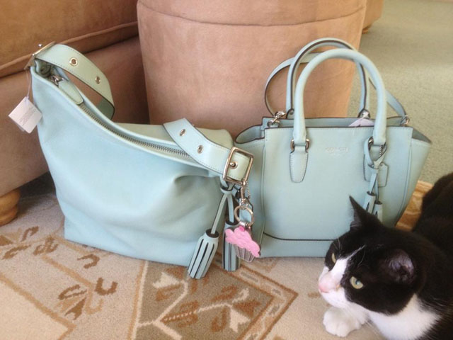Coach Bags cat photobomb