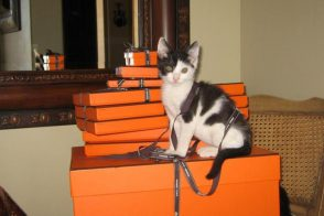 Hermes Boxes and Kitten