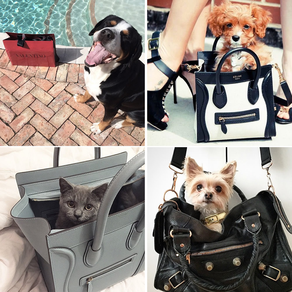 PursesandPaws