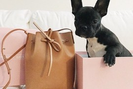 @PursesandPaws Should Be Your Newest Obsession, Trust Us