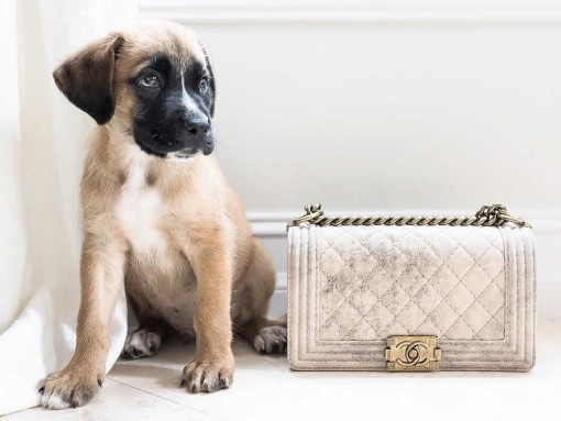 Brutus Chanel Bag
