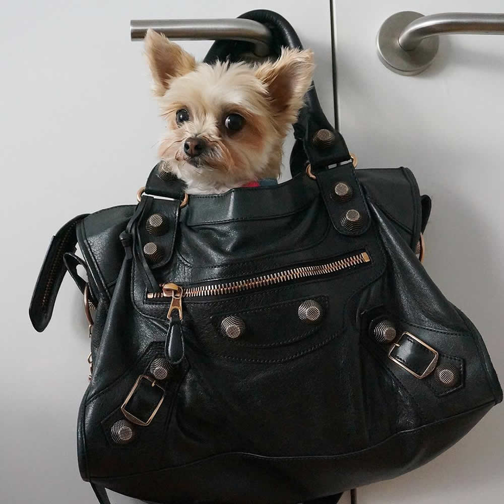 Pursesandpaws Instagram