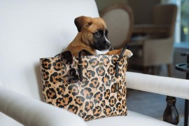 PurseBlog's Mascot, Brutus, For #coachpups