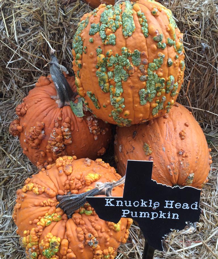 Weird-Pumpkins