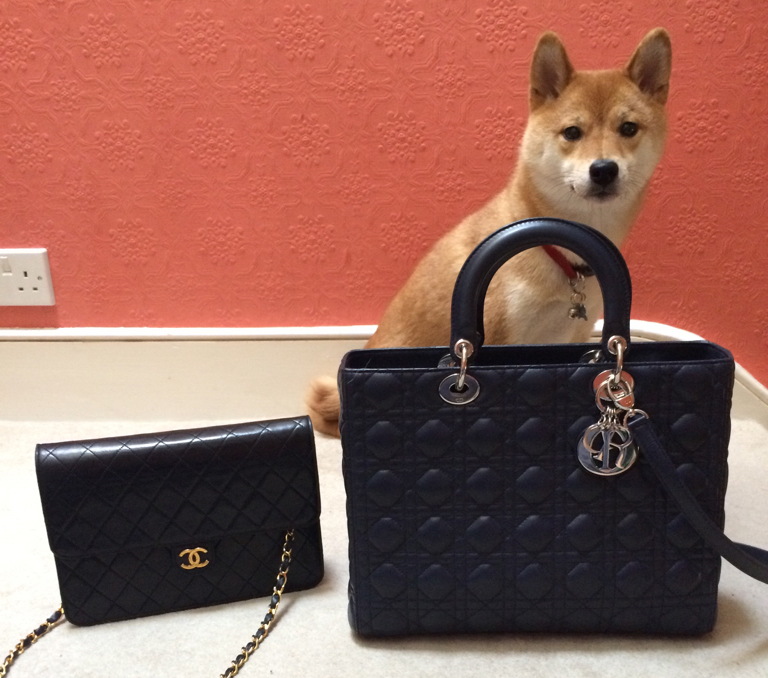 Dog-with-Chanel-and-Dior-Bags