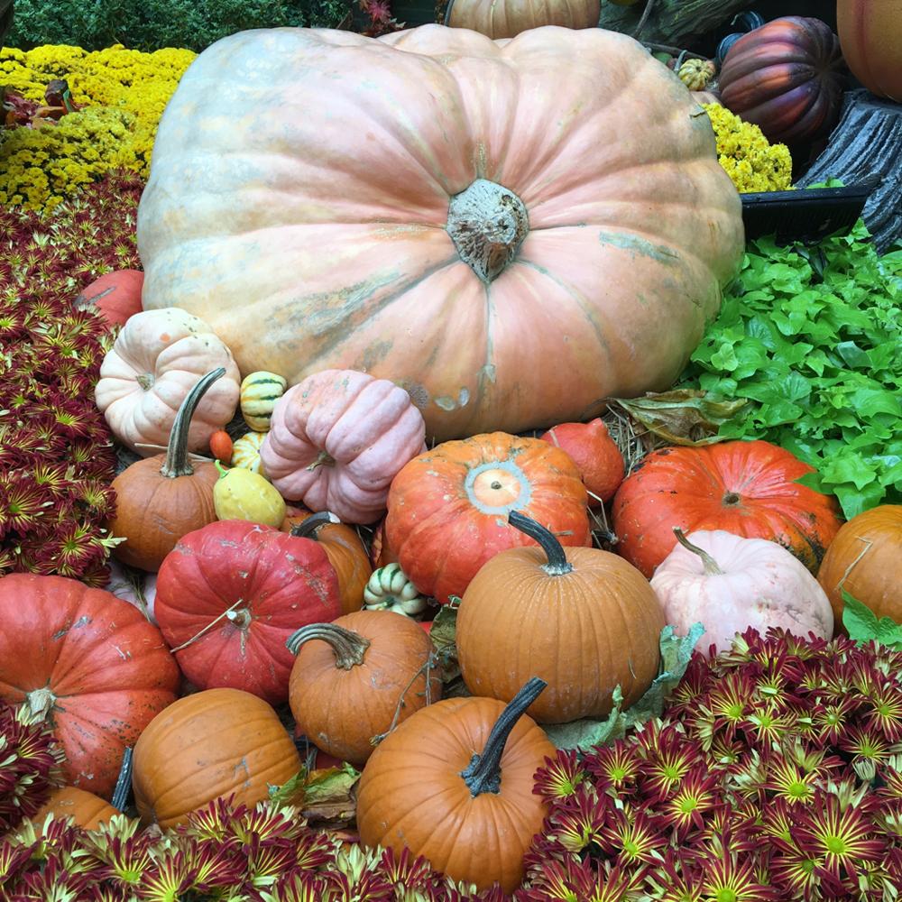 Decorative-Gourds