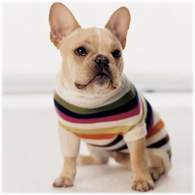 Coach Legacy Stripe Dog Sweater