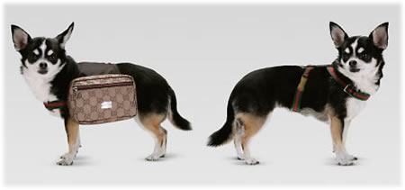 Gucci Dog Backpack