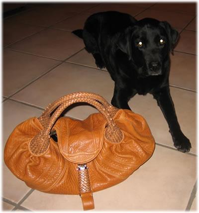 Nitro and Spy Bag